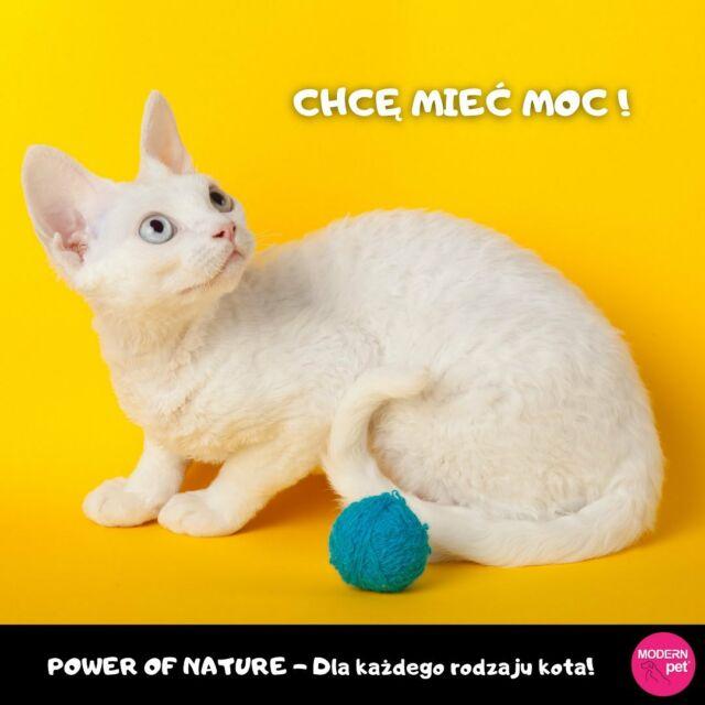 Cześć Kotomaniacy!   Power of Nature jest rewelacyjnym rozwiązaniem dla każdego rodzaju kota.   Starannie dobrane składniki orazich ilość pomaga wutrzymaniu zdrowego ciała orazducha kotów wkażdym wieku orazokażdym stopniu ruchliwości.   Czytajmy etykiety! 😀   Więcej informacji poniżej:  https://sklep.modernpet.pl/pl/170-power-of-nature  #healthpet #modernpet #cats #powerofnature #kitty